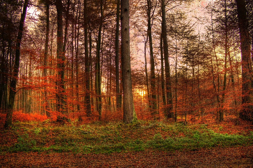 investir dans la forêt