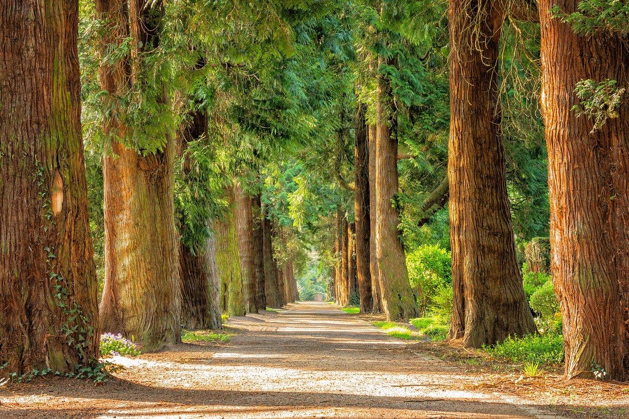 Le groupement forestier d'investissement